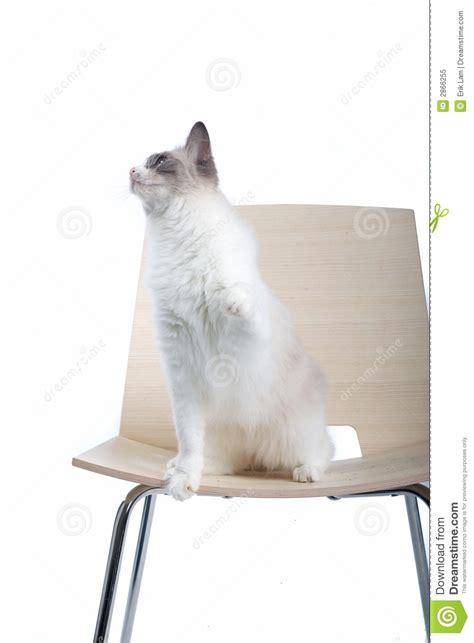 Cat On The Chair by Cat On Chair Royalty Free Stock Photo Image 2866255
