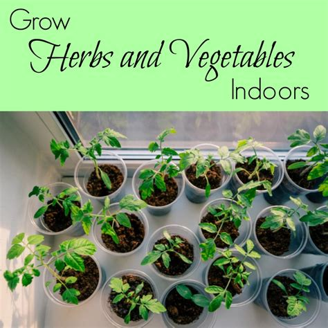 herbs indoors grow herbs and vegetables indoors a nation of moms