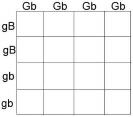 punnett square worksheet 1 answer key abitlikethis