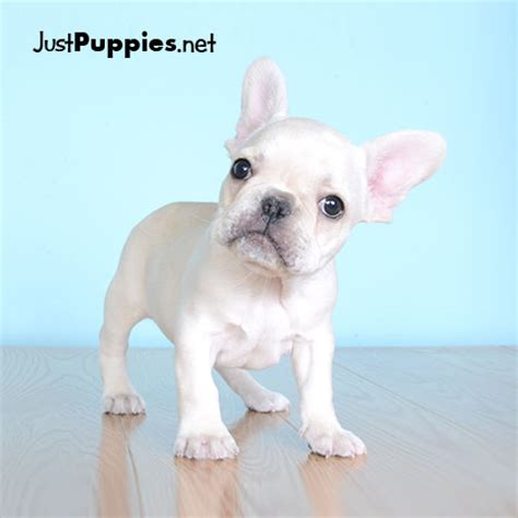 puppy stores orlando puppy store orlando dogs our friends photo