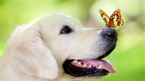 49 cute dog wallpapers top ranked cute dog wallpapers pc lkz484 hondvriendelijk hotel hotel en congrescentrum mennorode