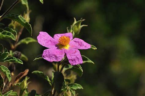 pianta grassa con fiore rosa pianta grassa con fiore rosso centrale