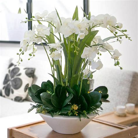 popular white orchid plants buy cheap white orchid plants