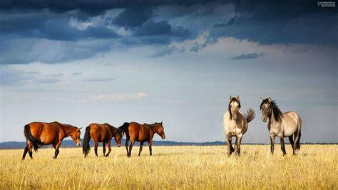 wallpaper hd 1920x1080 horses horses wallpaper 183