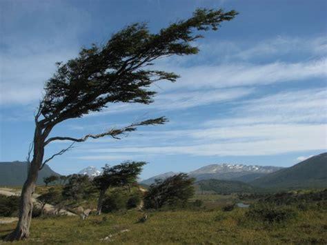 el viento en los meteo rolog 237 a 191 c 243 mo se forma el viento