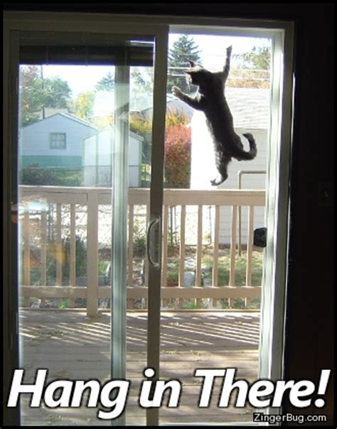 Hang In There Cat Meme - hang in there cat climbing screen door glitter graphic