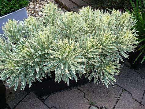 Ordinaire Plantes Vivaces En Jardiniere #8: D44d8ebe44e47a7579f85da8b6c5686e.jpg
