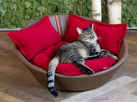 kitten beds luxury leather mila cat bed chelsea cats