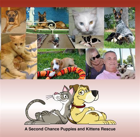 second chance puppies welcome to a second chance puppies and kittens rescue