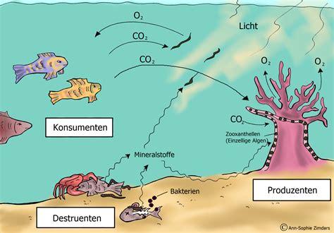 korallenriff gefaehrdung europa universitaet flensburg euf
