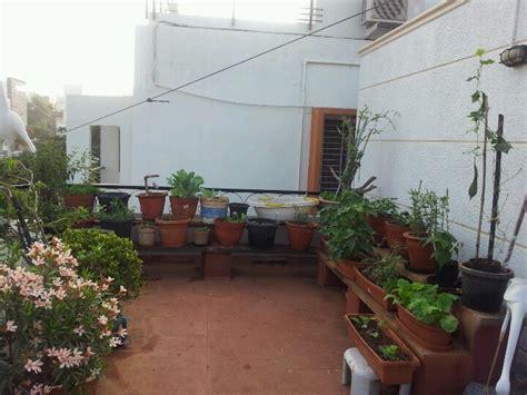 Vegetable Garden On Terrace India Vegetable Garden Using Namdhari Seeds Terrace