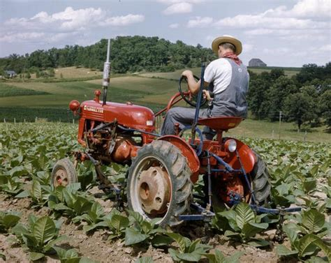 cultivating with farmall cub tractor photograph