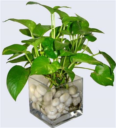 house for plants plants in nanopics indoor plants