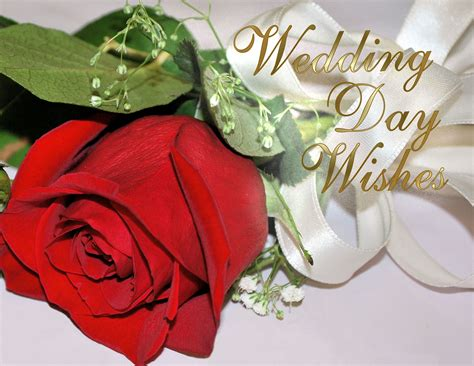 wedding day greeting card images cards by