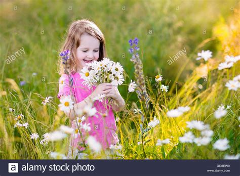the flower childs play child picking wild daisy flowers in field kids play in a meadow and stock photo royalty free