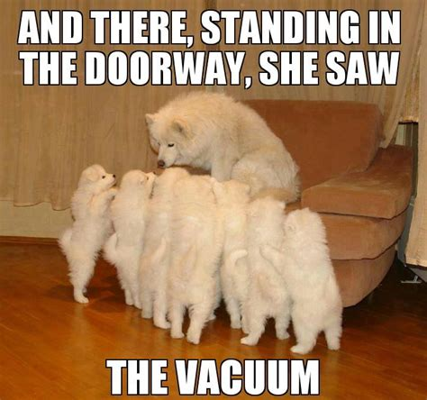 Dogs Meme - 7 funny dog memes and one gif to get the week started