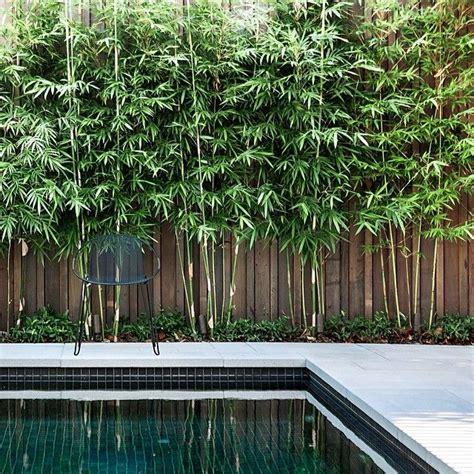 bamboo backyard privacy bambusa textilis gracilis bamboo madebytait