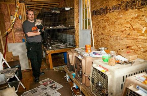 puppy mills in california stopping puppy mills in california and how you can help wildlife insider
