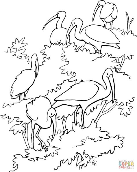 Scarlet Ibis Coloring Page the scarlet ibis bird free coloring pages
