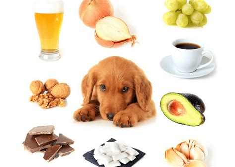 is cinnamon bad for dogs 5 everyday household things that are toxic for dogs