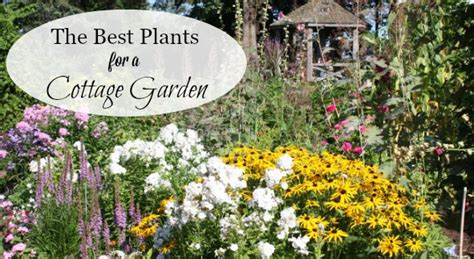 cottage garden plants a list of cottage garden plants the ultimate guide