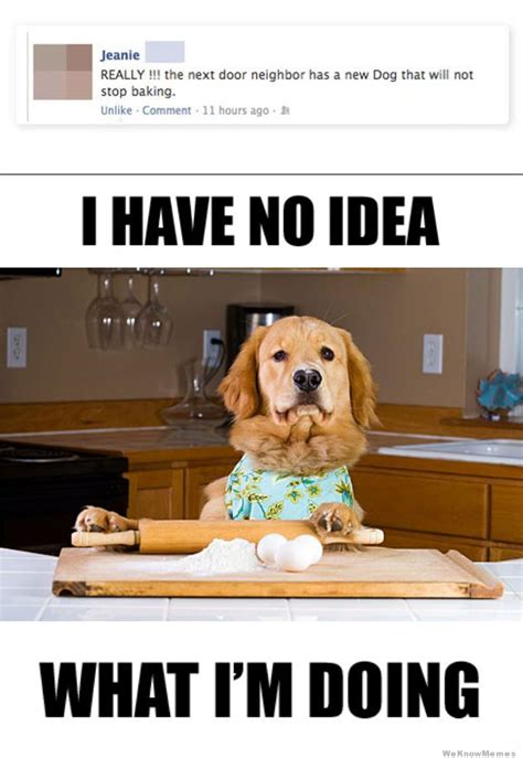 New Dog Meme - the neighbor s dog will not stop baking weknowmemes