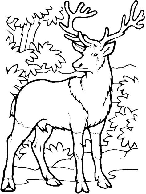 free printable deer coloring pages kids coloring pages