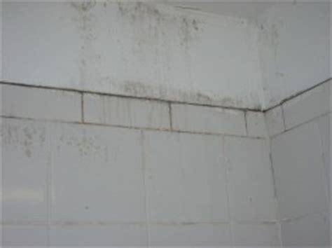 how to kill mold on walls of bathroom naturally kill mold and mildew big green purse