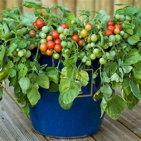 Growing Vegetables in Containers & Pots   How To Guide