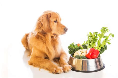 healthy snacks for dogs healthy snacks you can make for your pet alliance for homeless pets