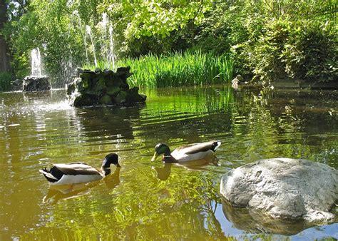 Maskara Ponds 2 In 1 garden features friends of government house gardens society