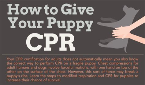 puppy cpr how to give your puppy cpr infographic edu