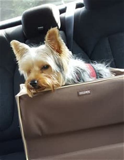 yorkie car seat helping a yorkie with car sickness