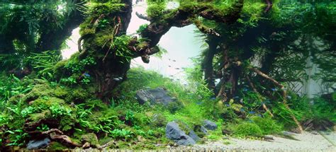 aquascape forest printable fish aquarium backgrounds