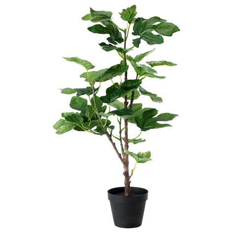 Plant Planter fejka artificial potted plant fig 12 cm ikea