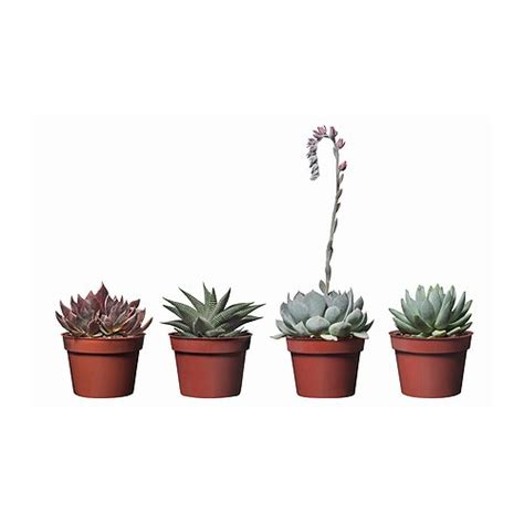 small pot plants succulent potted plant ikea