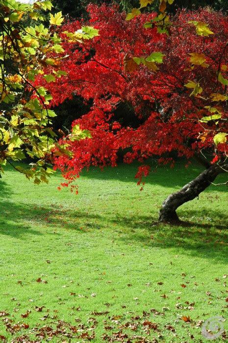 Alberi Nani Da Giardino alberi nani da giardino alberi nani da giardino la casa