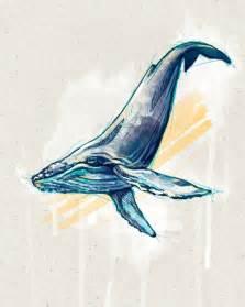 humpback whale illustration recherche google humpback