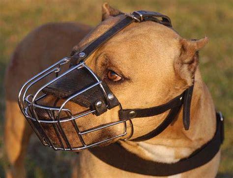 muzzle for pitbull pitbull wire muzzle cage basket muzzle m4 1060 wire muzzle muzzles