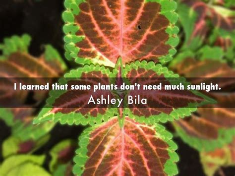 plants that don t need a lot of sun plants that do not need sunlight plants that don t need