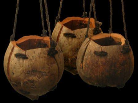 Pot Anggrek Unik kreasi pot unik dari buah kelapa new iqmal tahir s