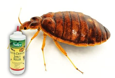 de powder for bed bugs safer brand 5168 diatomaceous earth powder ant crawling