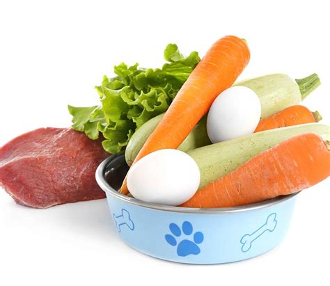 can dogs eat egg yolk can dogs eat eggs a food safety guide by the labrador site