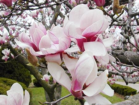 imagenes de flores invernales jardiner 237 a paisajismo flores coloridas de invierno