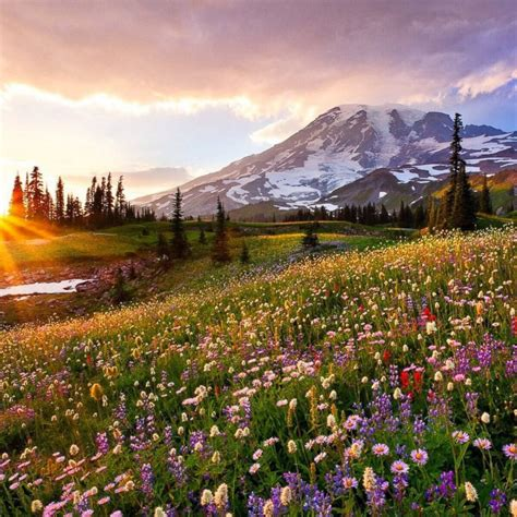 spring start the beauty of america s national parks photos image 30