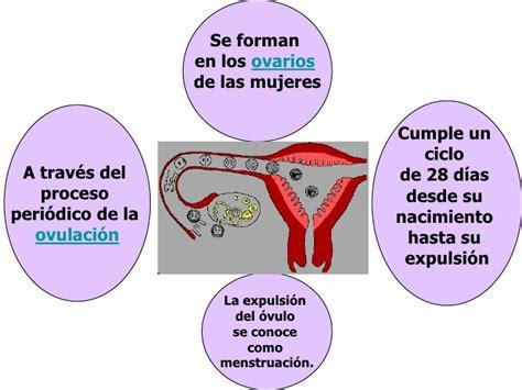 que es inductor de la ovulacion que es inductor de la ovulacion 28 images p 237 ldoras anticonceptivas serie baltimore
