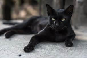 black cat names cattime