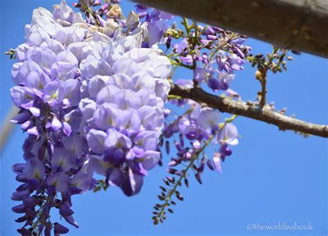 spring at san diego japanese friendship garden and balboa park