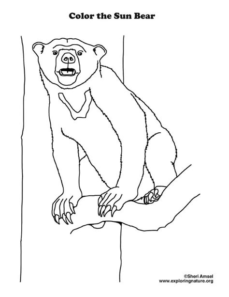 sun bear coloring pages bear sun coloring page