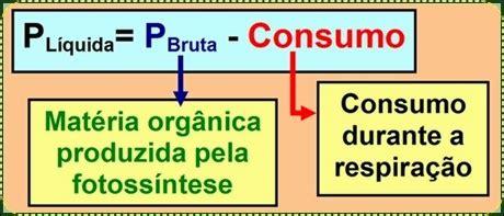 Banca Ppb by Genes Em Demes Banco De Quest 245 Es De Biologia Enem 2013